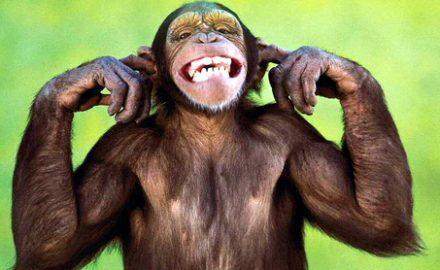Dacă oamenii se trag din maimuţe, noi le dăm motive să se simtă jignite