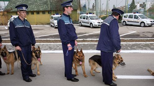 Scamatorul Caragea a palmat un câine lup din dotarea IPJ Gorj
