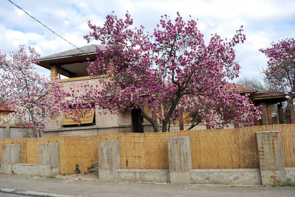 casa dr lupescu