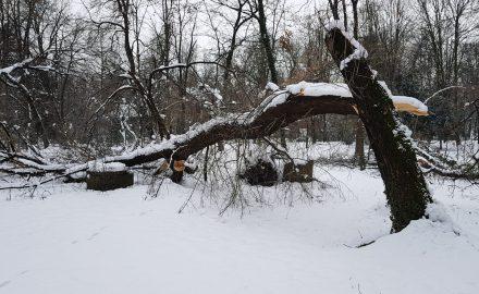 Exclusiv. Pictorial horror cu DEZASTRUL din Parcul Brâncuși, ÎNCHIS de patru zile de primarul Romanescu